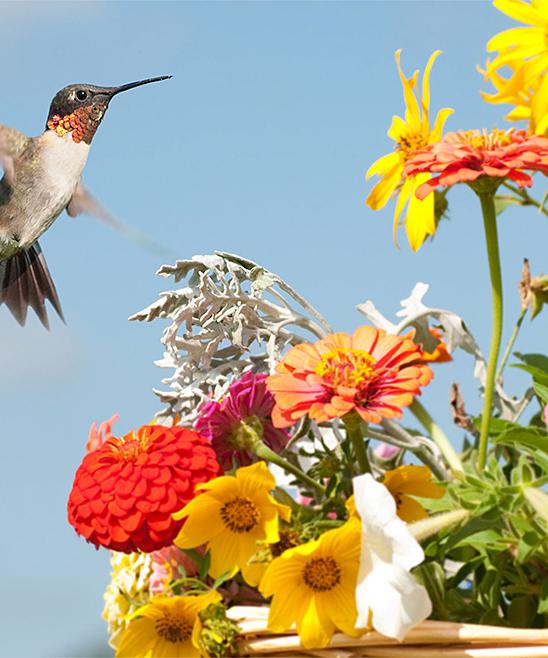 Touch Of ECO  Plant Seeds NA - Humming Bird Garden Flower Mat