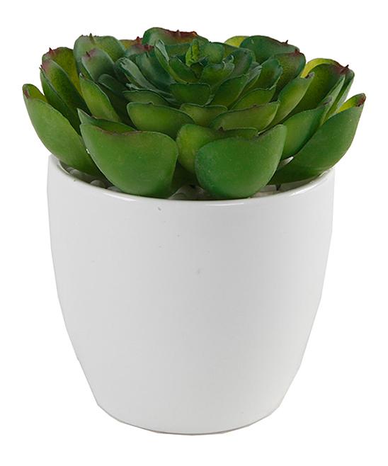 Green Potted Succulent Arrangement