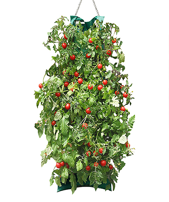 Touch Of ECO  Plant Seeds Multi - Organic Cherry Tomato Hanging Garden