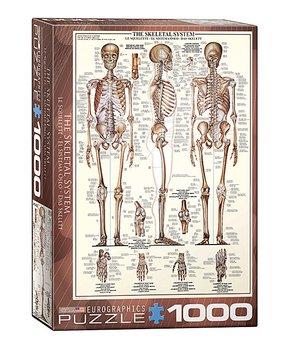 Eurographics | Skeletal System 1,000-Piece Puzzle