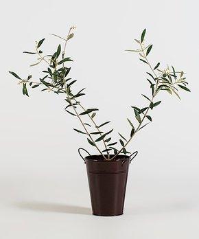 bloomsz | Live Olive Tree