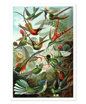 Oliver Gal | Haeckel Bird Study Print