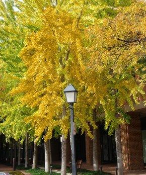 Van Zyverden | Lemon Citrus Tree Décorative Patio Planter
