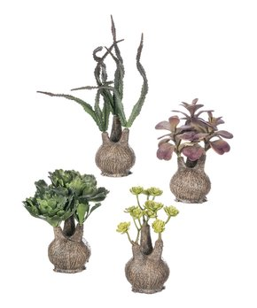 Sullivans Décor | Four-Piece Potted Succulents Set