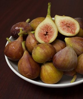 Perfect Plants | Live Brown Turkey Fig Tree