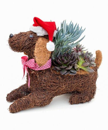 Christmas Succulent Arrangement.Theut S Flower Barn Christmas Dog Succulent Arrangement
