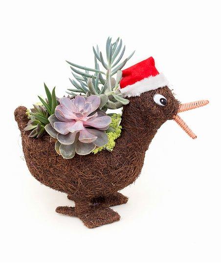 Christmas Succulent Arrangement.Theut S Flower Barn Christmas Duck Succulent Arrangement