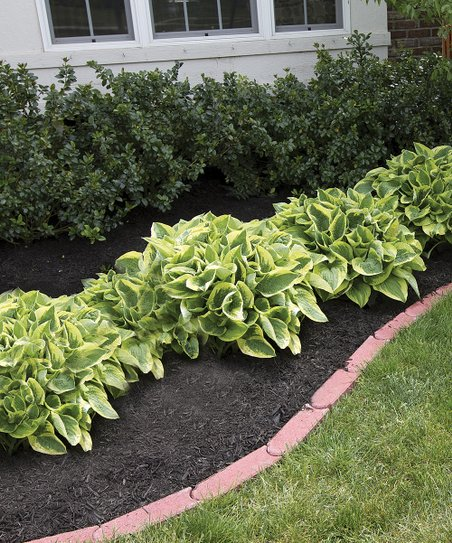 Touch Of Eco Hosta Perennial Mixed Bare Root Plants Set Of 18 Zulily