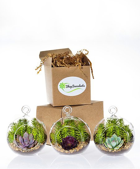 Shop Succulents Miniature Succulent Three Piece Terrarium Globe Kit
