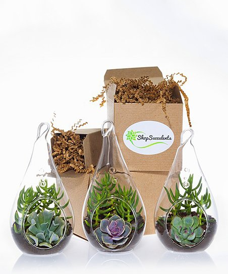 Shop Succulents Teardrop Succulent Three Piece Terrarium Globe Kit