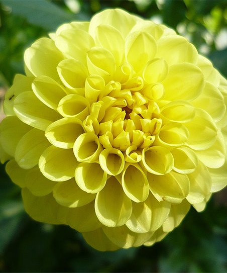 Touch Of Eco Yellow Flower Bulb Garden Set Of 25 Zulily