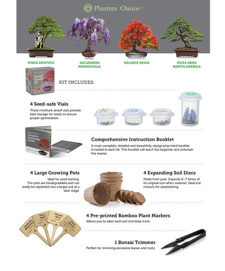 Planters Choice Bonsai Starter Kit Best Price And Reviews Zulily