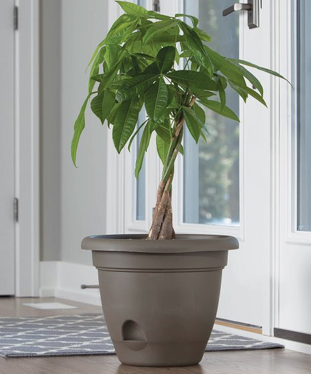 Bloem Living Chocolate Lucca Self Watering Planter Zulily