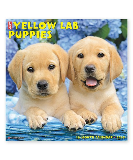 Willow Creek Press 2019 Just Yellow Lab Puppies Wall Calendar Zulily