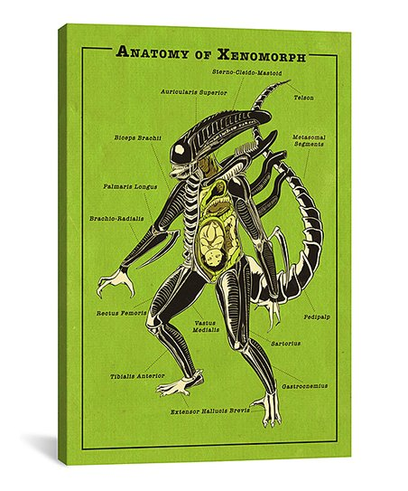 zu60384448_main_tm1536091407 icanvas 5by5collective alien anatomy diagram wrapped canvas zulily