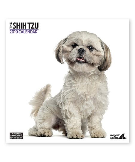 Magnet Steel Shih Tzu Modern 2019 Calendar Zulily