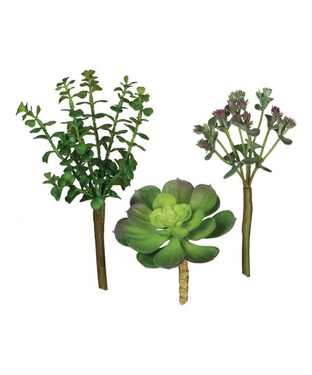 Sullivans Artificial Succulent Picks Set Of Three Zulily